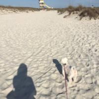 Elvy_beach.jpg